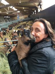 goat farm hugging baby goat cute cheese rural life